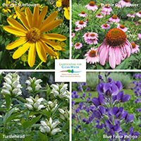 photos of four native flowering plants