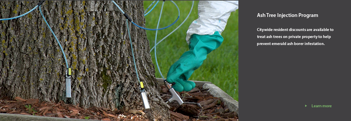 taps being inserted into tree base to treat EAB